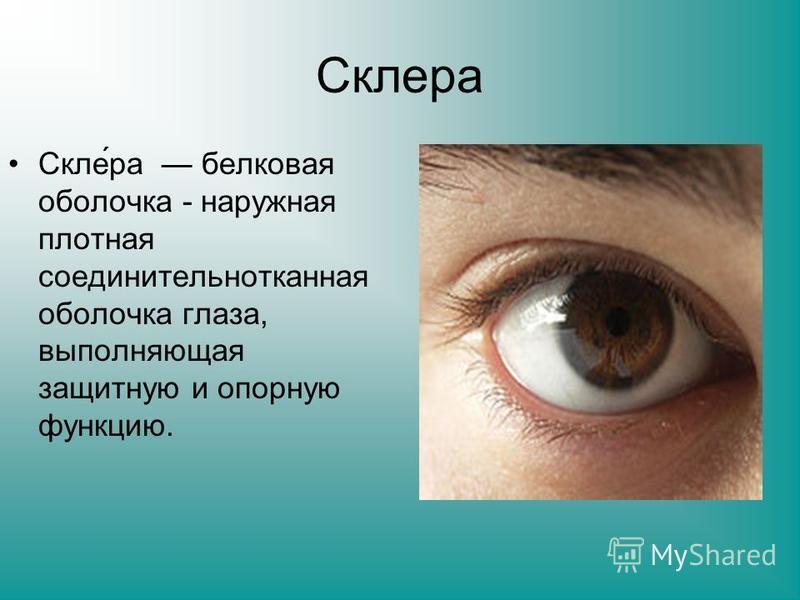 Склера Скле́ра белковая оболочка - наружная плотная соединительнотканная оболочка глаза, выполняющая защитную и опорную функцию.