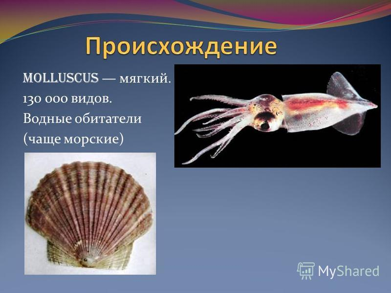 MOLLUSCUS мягкий. 130 000 видов. Водные обитатели (чаще морские)