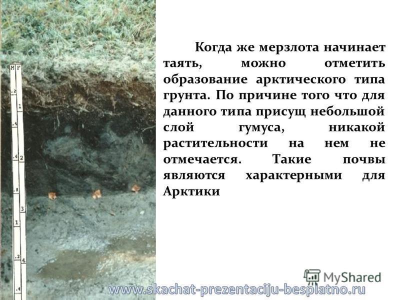 Когда же мерзлота начинает таять, можно отметить образование арктического типа грунта. По причине того что для данного типа присущ небольшой слой гумуса, никакой растительности на нем не отмечается. Такие почвы являются характерными для Арктики