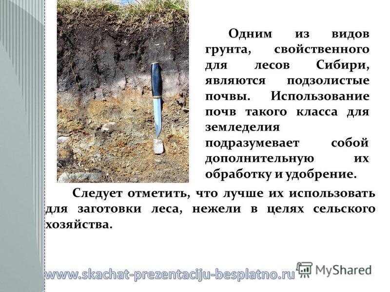 Следует отметить, что лучше их использовать для заготовки леса, нежели в целях сельского хозяйства. Одним из видов грунта, свойственного для лесов Сибири, являются подзолистые почвы. Использование почв такого класса для земледелия подразумевает собой