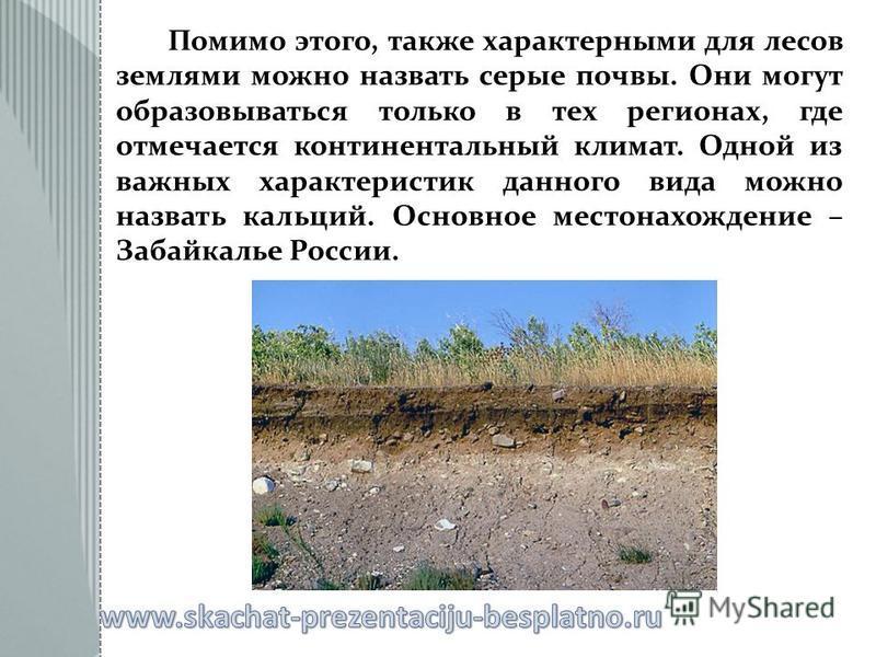 Помимо этого, также характерными для лесов землями можно назвать серые почвы. Они могут образовываться только в тех регионах, где отмечается континентальный климат. Одной из важных характеристик данного вида можно назвать кальций. Основное местонахож