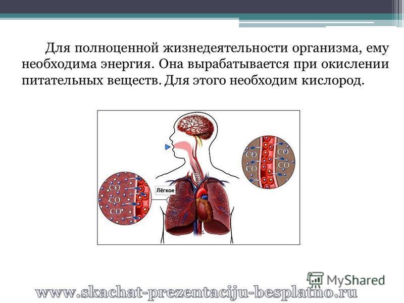 Для полноценной жизнедеятельности организма, ему необходима энергия. Она вырабатывается при окислении питательных веществ. Для этого необходим кислород.