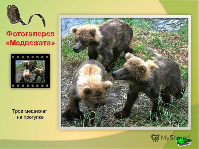 Трое медвежат на прогулке