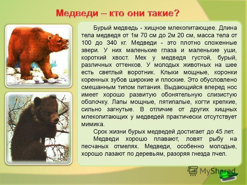 Бурый медведь - хищное млекопитающее. Длина тела медведя от 1 м 70 см до 2 м 20 см, масса тела от 100 до 340 кг. Медведи - это плотно сложенные звери. У них маленькие глаза и маленькие уши, короткий хвост. Мех у медведя густой, бурый, различных оттен