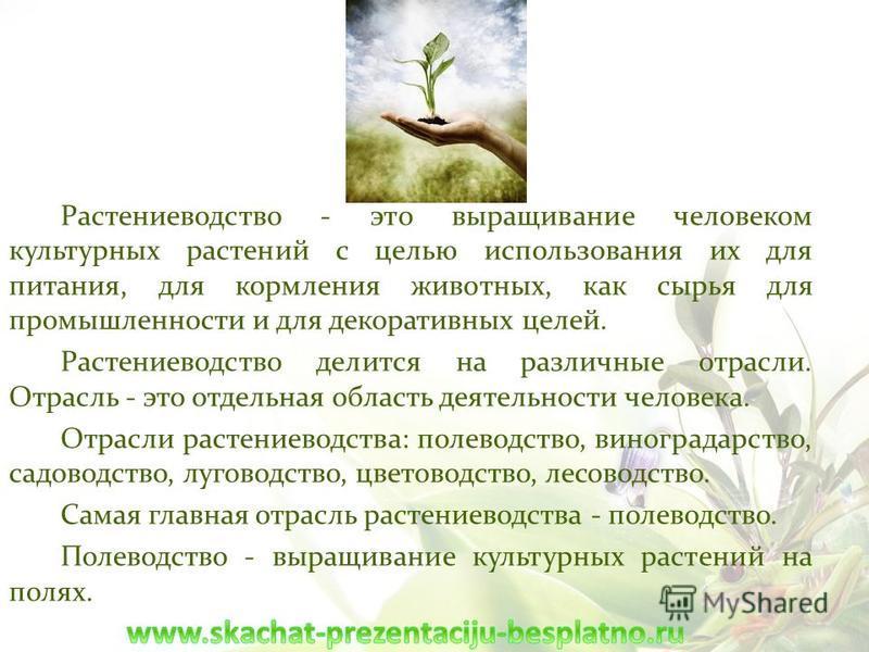 Растениеводство - это выращивание человеком культурных растений с целью использования их для питания, для кормления животных, как сырья для промышленности и для декоративных целей. Растениеводство делится на различные отрасли. Отрасль - это отдельная