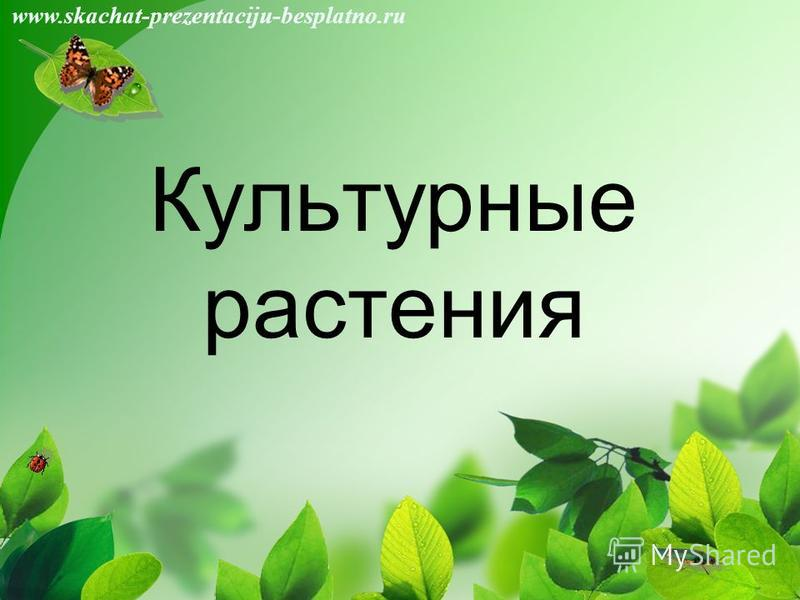 Культурные растения www.skachat-prezentaciju-besplatno.ru