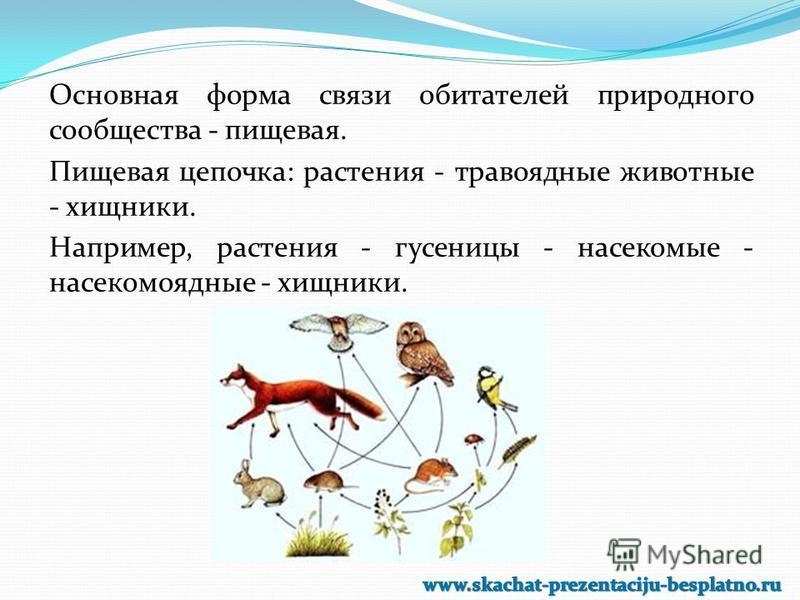 Основная форма связи обитателей природного сообщества - пищевая. Пищевая цепочка: растения - травоядные животные - хищники. Например, растения - гусеницы - насекомые - насекомоядные - хищники.