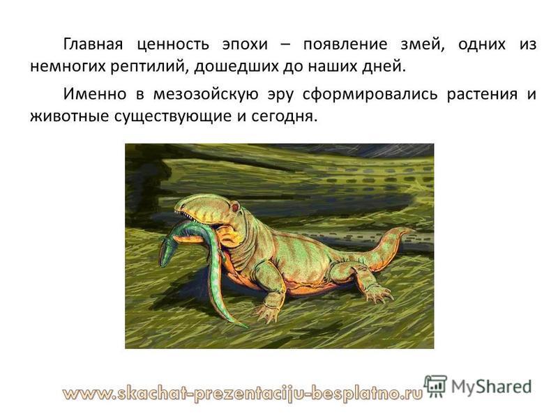 Главная ценность эпохи – появление змей, одних из немногих рептилий, дошедших до наших дней. Именно в мезозойскую эру сформировались растения и животные существующие и сегодня.