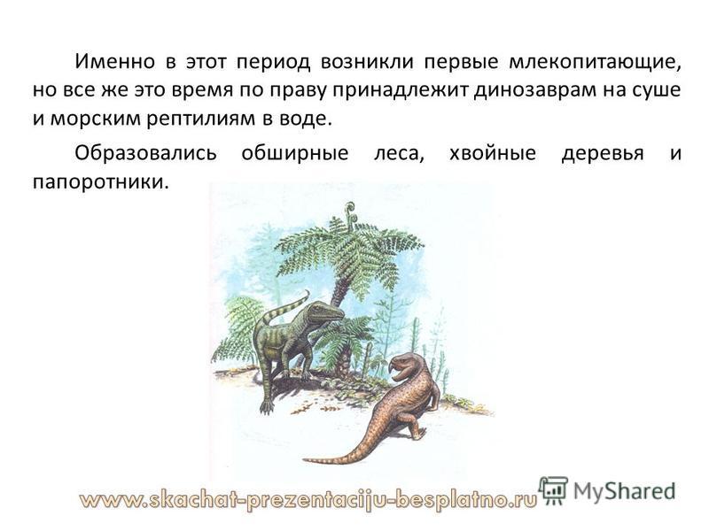 Именно в этот период возникли первые млекопитающие, но все же это время по праву принадлежит динозаврам на суше и морским рептилиям в воде. Образовались обширные леса, хвойные деревья и папоротники.