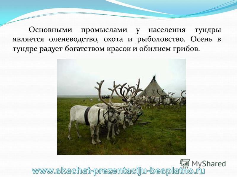 Основными промыслами у населения тундры является оленеводство, охота и рыболовство. Осень в тундре радует богатством красок и обилием грибов.