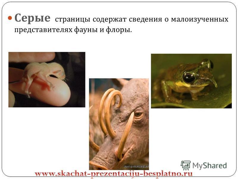 Серые страницы содержат сведения о малоизученных представителях фауны и флоры.
