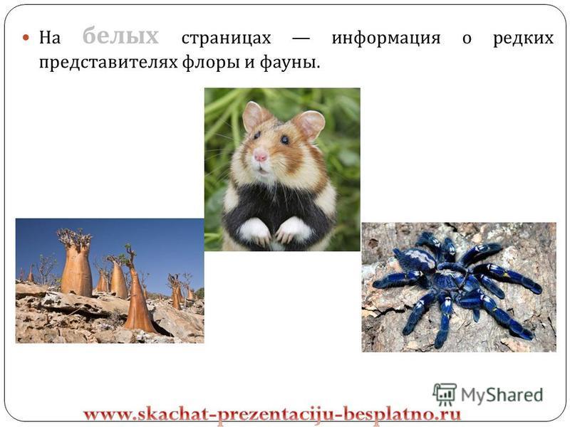 На белых страницах информация о редких представителях флоры и фауны.
