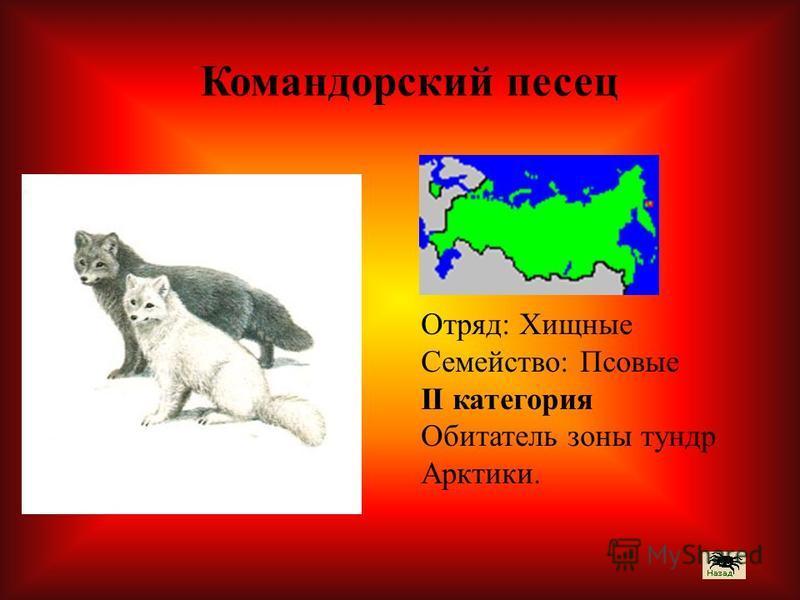 Отряд: Хищные Семейство: Псовые II категория Обитатель зоны тундр Арктики. Командорский песец