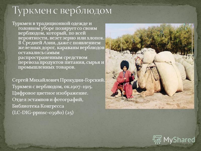 Туркмен в традиционной одежде и головном уборе позирует со своим верблюдом, который, по всей вероятности, везет зерно или хлопок. В Средней Азии, даже с появлением железных дорог, караваны верблюдов оставались самым распространенным средством перевоз