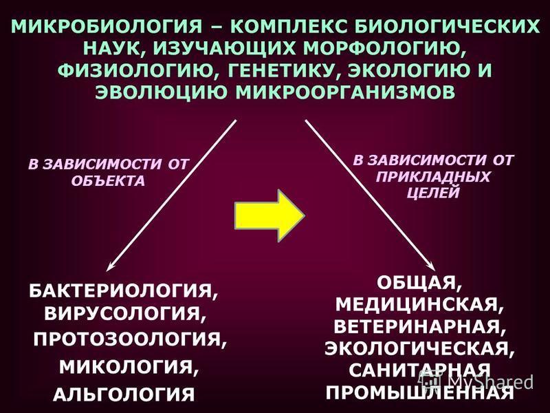 МИКРОБИОЛОГИЯ – КОМПЛЕКС БИОЛОГИЧЕСКИХ НАУК, ИЗУЧАЮЩИХ МОРФОЛОГИЮ, ФИЗИОЛОГИЮ, ГЕНЕТИКУ, ЭКОЛОГИЮ И ЭВОЛЮЦИЮ МИКРООРГАНИЗМОВ ОБЩАЯ, МЕДИЦИНСКАЯ, ВЕТЕРИНАРНАЯ, ЭКОЛОГИЧЕСКАЯ, САНИТАРНАЯ ПРОМЫШЛЕННАЯ В ЗАВИСИМОСТИ ОТ ОБЪЕКТА В ЗАВИСИМОСТИ ОТ ПРИКЛАДНЫХ