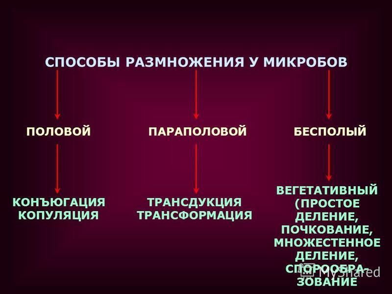 СПОСОБЫ РАЗМНОЖЕНИЯ У МИКРОБОВ ПОЛОВОЙПАРАПОЛОВОЙБЕСПОЛЫЙ КОНЪЮГАЦИЯ КОПУЛЯЦИЯ ТРАНСДУКЦИЯ ТРАНСФОРМАЦИЯ ВЕГЕТАТИВНЫЙ (ПРОСТОЕ ДЕЛЕНИЕ, ПОЧКОВАНИЕ, МНОЖЕСТЕННОЕ ДЕЛЕНИЕ, СПОРООБРА- ЗОВАНИЕ
