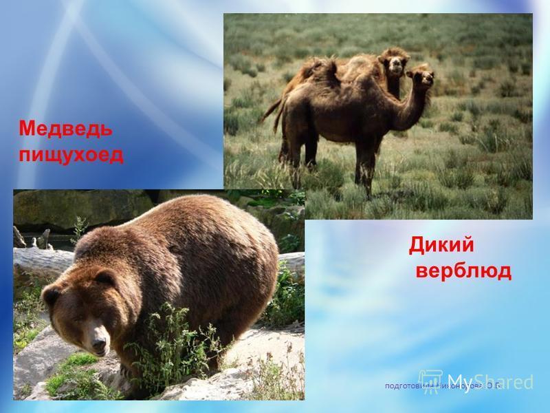 подготовила Никонорова О.В. Медведь пищухоед Дикий верблюд