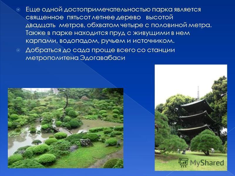 Еще одной достопримечательностью парка является священное пятьсот летнее дерево высотой двадцать метров, обхватом четыре с половиной метра. Также в парке находится пруд с живущими в нем карпами, водопадом, ручьем и источником. Добраться до сада проще