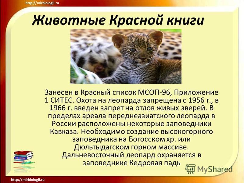 Животные Красной книги Занесен в Красный список МСОП-96, Приложение 1 СИТЕС. Охота на леопарда запрещена с 1956 г., в 1966 г. введен запрет на отлов живых зверей. В пределах ареала переднеазиатского леопарда в России расположены некоторые заповедники