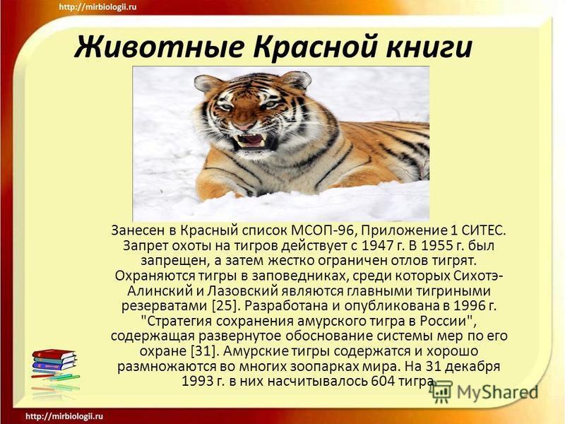 Животные Красной книги Занесен в Красный список МСОП-96, Приложение 1 СИТЕС. Запрет охоты на тигров действует с 1947 г. В 1955 г. был запрещен, а затем жестко ограничен отлов тигрят. Охраняются тигры в заповедниках, среди которых Сихотэ- Алинский и Л