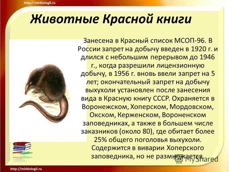 Животные Красной книги Занесена в Красный список МСОП-96. В России запрет на добычу введен в 1920 г. и длился с небольшим перерывом до 1946 г., когда разрешили лицензионную добычу, в 1956 г. вновь ввели запрет на 5 лет; окончательный запрет на добычу