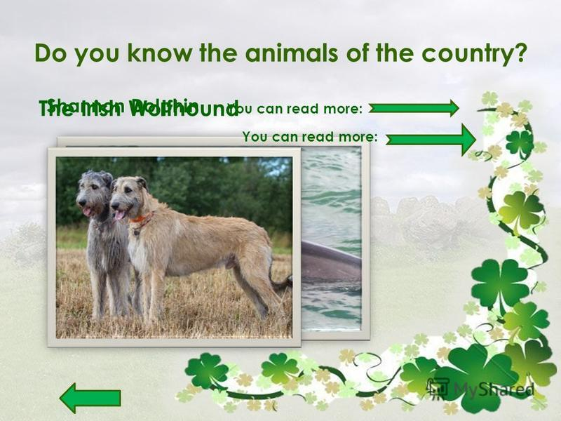Do you know the animals of the country? Shannon Dolphin You can read more: The Irish Wolfhound You can read more: