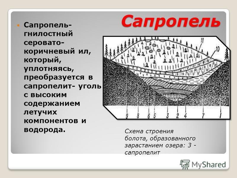 Сапропель Сапропель- гнилостный серовато- коричневый ил, который, уплотняясь, преобразуется в сапропелит- уголь с высоким содержанием летучих компонентов и водорода. Схема строения болота, образованного зарастанием озера: 3 - сапропелит