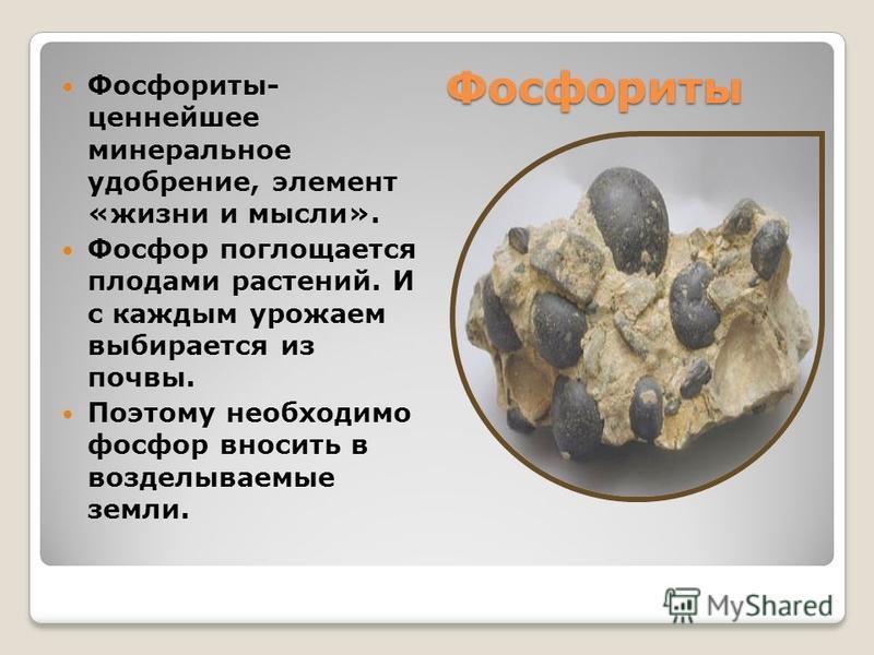 Фосфориты Фосфориты- ценнейшее минеральное удобрение, элемент «жизни и мысли». Фосфор поглощается плодами растений. И с каждым урожаем выбирается из почвы. Поэтому необходимо фосфор вносить в возделываемые земли.