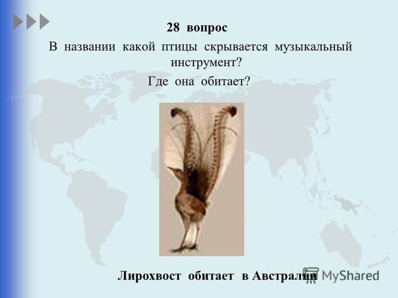 28 вопрос В названии какой птицы скрывается музыкальный инструмент? Где она обитает? Лирохвост обитает в Австралии