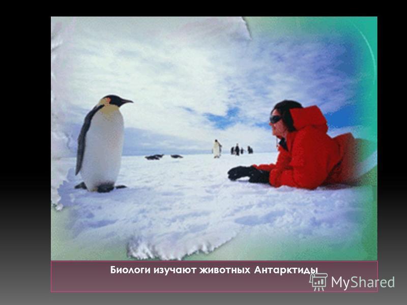 Биологи изучают животных Антарктиды