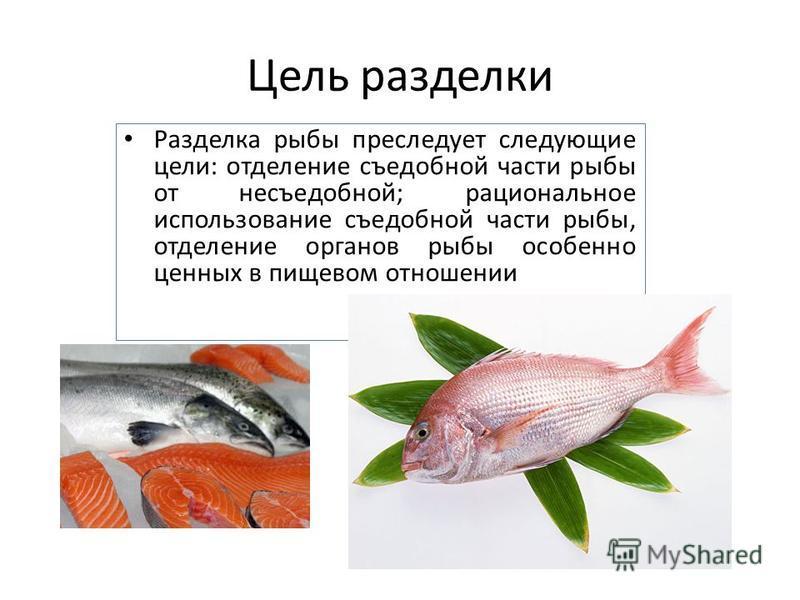 Цель разделки Разделка рыбы преследует следующие цели: отделение съедобной части рыбы от несъедобной; рациональное использование съедобной части рыбы, отделение органов рыбы особенно ценных в пищевом отношении