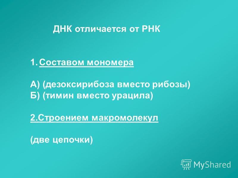 ДНК отличается от РНК 1. Составом мономера А) (дезоксирибоза вместо рибозы) Б) (тимин вместо урацила) 2. Строением макромолекул (две цепочки)