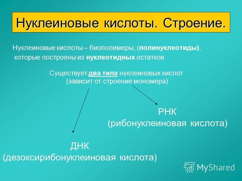 Нуклеиновые кислоты – биополимеры, (полинуклеотиды), которые построены из нуклеотидных остатков. Нуклеиновые кислоты. Строение. Существует два типа нуклеиновых кислот (зависит от строение мономера) ДНК (дезоксирибонуклеиновая кислота) РНК (рибонуклеи