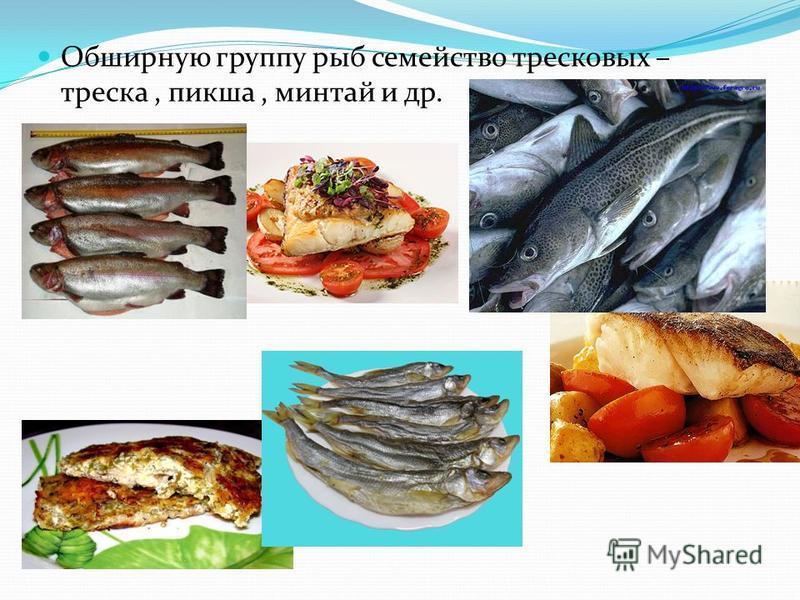Обширную группу рыб семейство тресковых – треска, пикша, минтай и др.