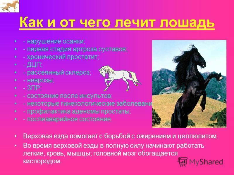 Как и от чего лечит лошадь - нарушение осанки; - первая стадия артроза суставов; - хронический простатит; - ДЦП; - рассеянный склероз; - неврозы; - ЗПР; - состояние после инсультов; - некоторые гинекологические заболевания; - профилактика аденомы про