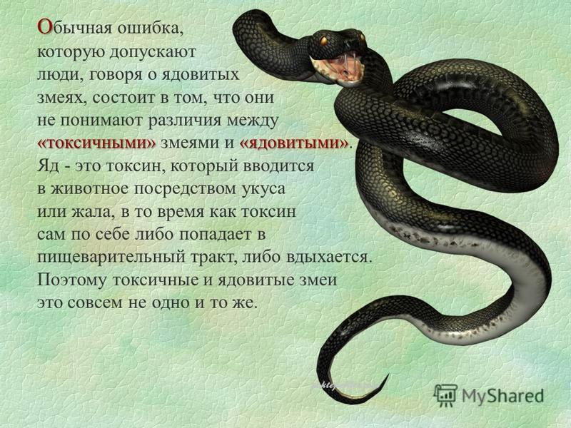 О О бычная ошибка, которую допускают люди, говоря о ядовитых змеях, состоит в том, что они не понимают различия между «токсичными» «ядовитыми» «токсичными» змеями и «ядовитыми». Яд - это токсин, который вводится в животное посредством укуса или жала,