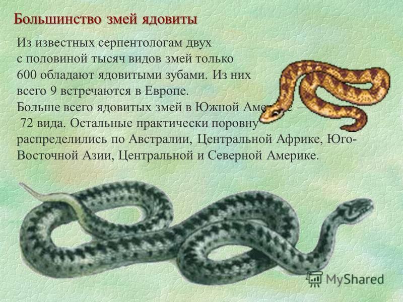 Большинство змей ядовиты Из известных серпентологам двух с половиной тысяч видов змей только 600 обладают ядовитыми зубами. Из них всего 9 встречаются в Европе. Больше всего ядовитых змей в Южной Америке 72 вида. Остальные практически поровну распред