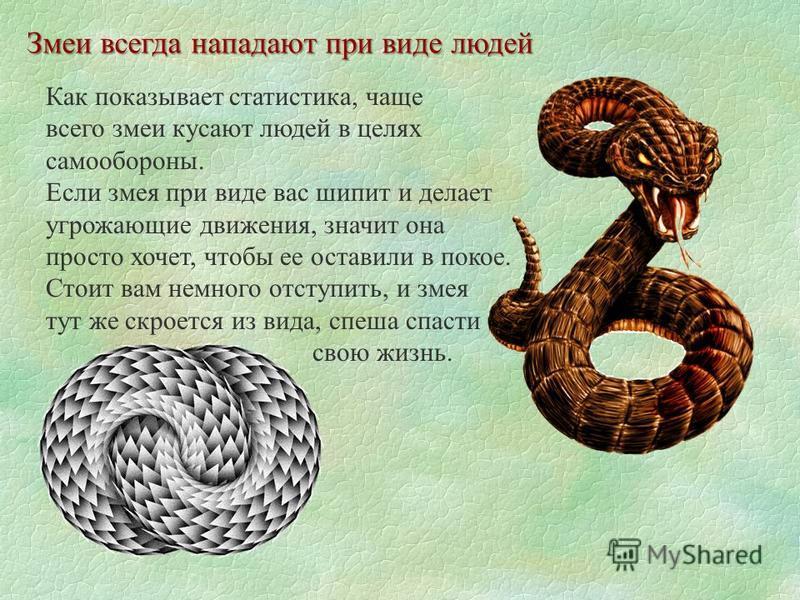 Змеи всегда нападают при виде людей Как показывает статистика, чаще всего змеи кусают людей в целях самообороны. Если змея при виде вас шипит и делает угрожающие движения, значит она просто хочет, чтобы ее оставили в покое. Стоит вам немного отступит