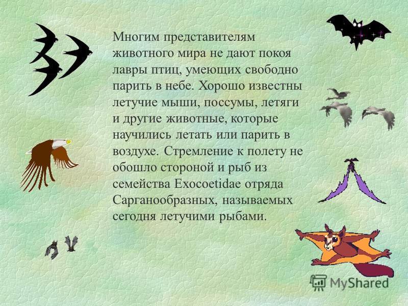 Многим представителям животного мира не дают покоя лавры птиц, умеющих свободно парить в небе. Хорошо известны летучие мыши, поссумы, летяги и другие животные, которые научились летать или парить в воздухе. Стремление к полету не обошло стороной и ры