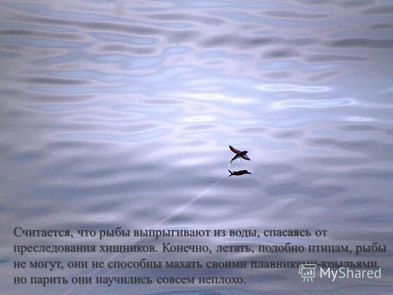 Считается, что рыбы выпрыгивают из воды, спасаясь от преследования хищников. Конечно, летать, подобно птицам, рыбы не могут, они не способны махать своими плавниками-крыльями, но парить они научились совсем неплохо.
