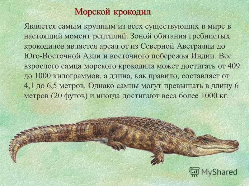 Морской крокодил Является самым крупным из всех существующих в мире в настоящий момент рептилий. Зоной обитания гребнистых крокодилов является ареал от из Северной Австралии до Юго-Восточной Азии и восточного побережья Индии. Вес взрослого самца морс