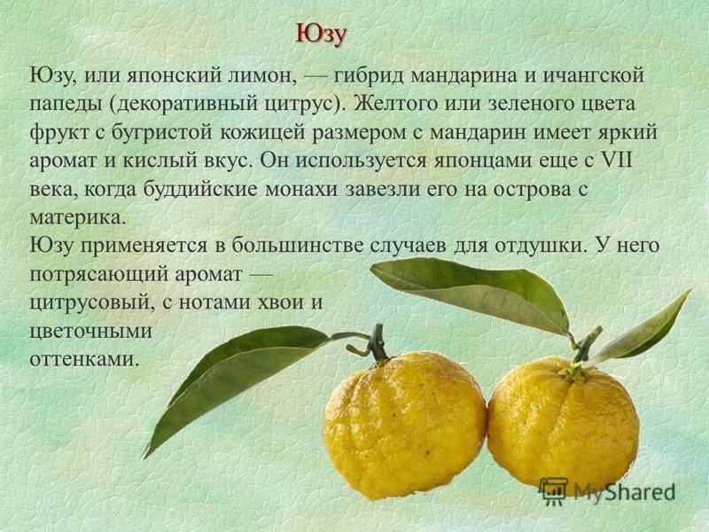 Юзу Юзу, или японский лимон, гибрид мандарина и ичангской папеды (декоративный цитрус). Желтого или зеленого цвета фрукт с бугристой кожицей размером с мандарин имеет яркий аромат и кислый вкус. Он используется японцами еще с VII века, когда буддийск