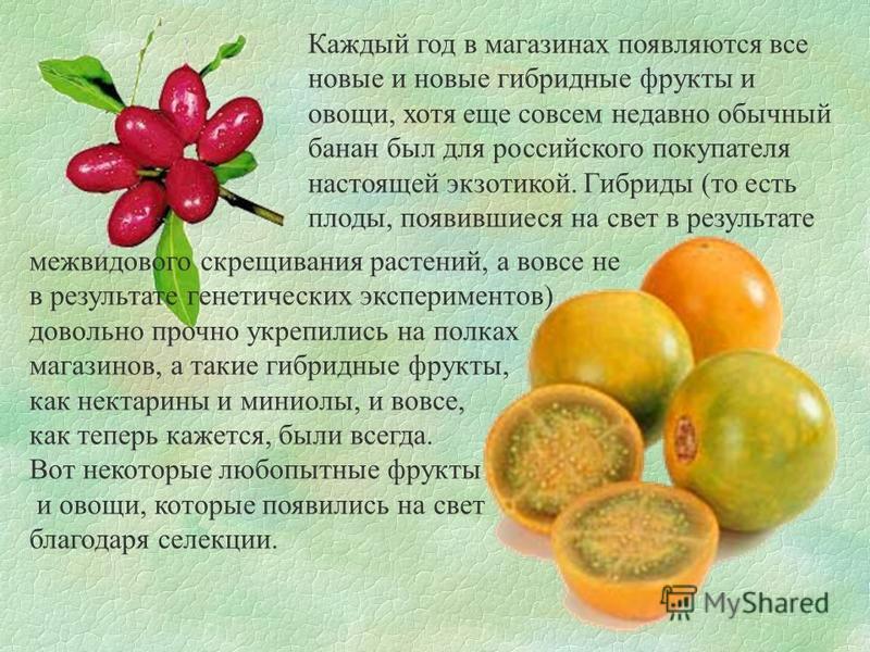 Каждый год в магазинах появляются все новые и новые гибридные фрукты и овощи, хотя еще совсем недавно обычный банан был для российского покупателя настоящей экзотикой. Гибриды (то есть плоды, появившиеся на свет в результате межвидового скрещивания р
