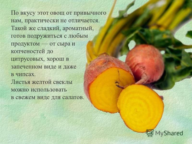 По вкусу этот овощ от привычного нам, практически не отличается. Такой же сладкий, ароматный, готов подружиться с любым продуктом от сыра и копченостей до цитрусовых, хорош в запеченном виде и даже в чипсах. Листья желтой свеклы можно использовать в