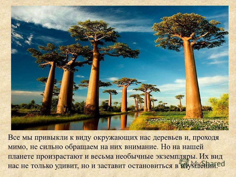 Все мы привыкли к виду окружающих нас деревьев и, проходя мимо, не сильно обращаем на них внимание. Но на нашей планете произрастают и весьма необычные экземпляры. Их вид нас не только удивит, но и заставит остановиться в изумлении.