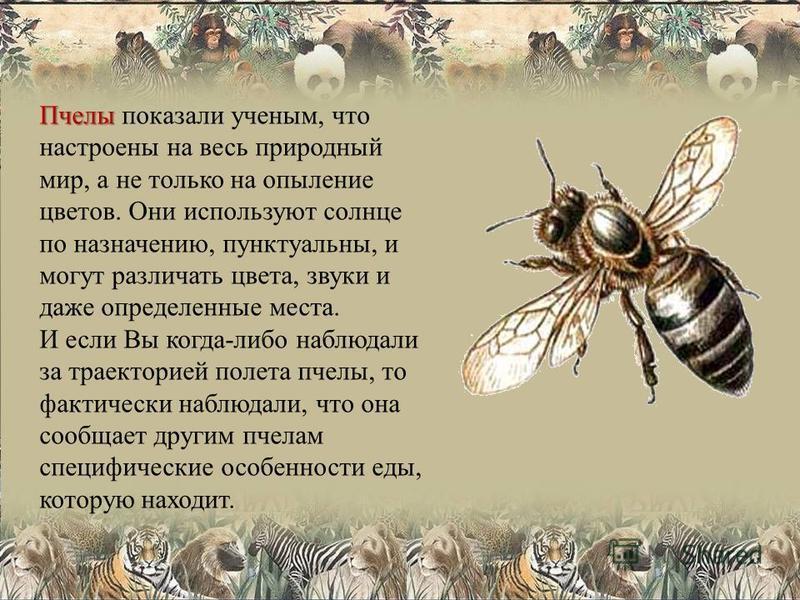 Пчелы Пчелы показали ученым, что настроены на весь природный мир, а не только на опыление цветов. Они используют солнце по назначению, пунктуальны, и могут различать цвета, звуки и даже определенные места. И если Вы когда-либо наблюдали за траекторие