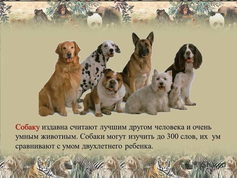 Собаку Собаку издавна считают лучшим другом человека и очень умным животным. Собаки могут изучить до 300 слов, их ум сравнивают с умом двухлетнего ребенка.