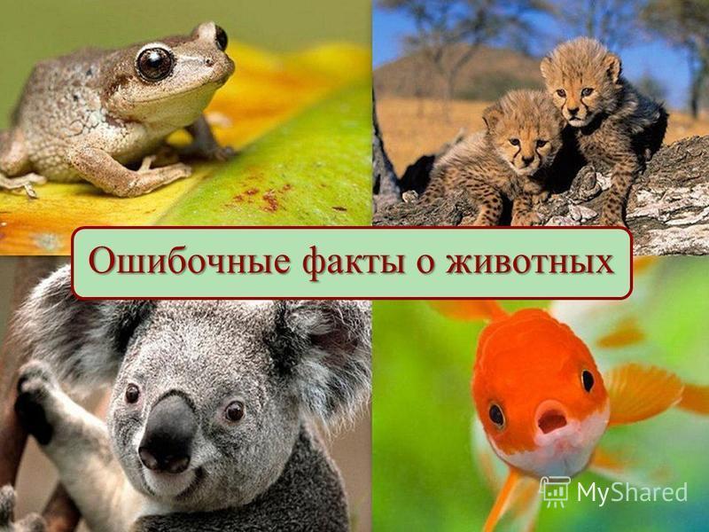 Ошибочные факты о животных