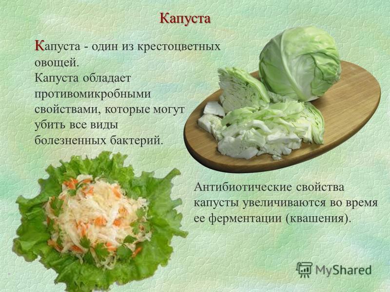 К К апуста - один из крестоцветных овощей. Капуста обладает противомикробными свойствами, которые могут убить все виды болезненных бактерий. Антибиотические свойства капусты увеличиваются во время ее ферментации (квашения). Капуста