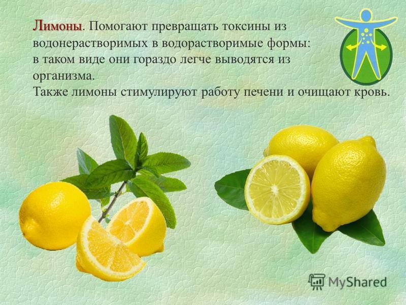 Л имоны Л имоны. Помогают превращать токсины из водонерастворимых в водорастворимые формы: в таком виде они гораздо легче выводятся из организма. Также лимоны стимулируют работу печени и очищают кровь.